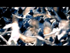 Goo Goo Dolls - Dizzy
