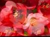Wolfgang Amadeus Mozart - Mozart: DON GIOVANNI - Madamina (Leporello) - Opera without Voices
