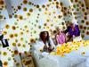 Bob Geldof - My Hippy Angel