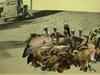 Nacho Umbert & la compañía - El Mort i el Degollat