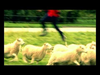 Beatsteaks - Demons Galore - Version 1 - Official