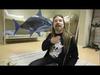 Sabaton - Carolus Rex - Fast, as a shark?