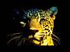 MaRLo - Jaguar (Short Edit)