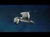 David Gray - Gulls
